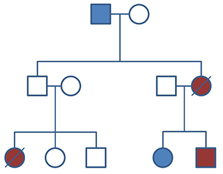 A pedigree with multiple cases of cancer
