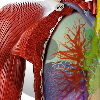 Pulmonary, Musculoskeletal & Ophthalmologic Imaging