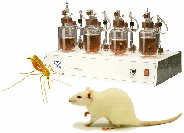 rodent model of malaria